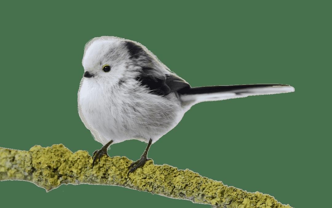 Bücher rund um die bunte Vogelschar